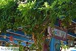 Zia - Island of Kos -  Photo 38 - Photo JustGreece.com