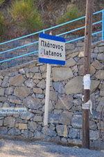 JustGreece.com Platanos near Tholos | Lassithi Crete | Photo 2 - Foto van JustGreece.com