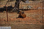 JustGreece.com Agia Triada Tzagarolon Crete - Chania Prefecture - Photo 4 - Foto van JustGreece.com