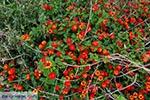 Chania city Crete - Chania Prefecture - Photo 5 - Photo JustGreece.com