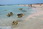 Elafonisi Crete - Chania Prefecture - Photo 15 - Photo JustGreece.com