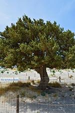Elafonisi Crete - Chania Prefecture - Photo 50 - Photo JustGreece.com