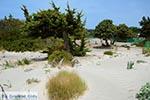 Elafonisi Crete - Chania Prefecture - Photo 51 - Photo JustGreece.com