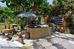 JustGreece.com Elos Crete - Chania Prefecture - Photo 15 - Foto van JustGreece.com