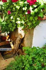 Spili | Rethymnon Crete | Photo 8 - Photo JustGreece.com