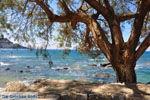 Plakias | Rethymnon Crete | Photo 23 - Photo JustGreece.com