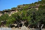 JustGreece.com Koudoumas Crete - Heraklion Prefecture - Photo 47 - Foto van JustGreece.com