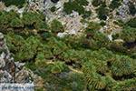Preveli beach Crete - Rethymno Prefecture - Photo 8 - Photo JustGreece.com