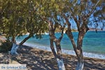 JustGreece.com Blefoutis beach Partheni - Island of Leros - Dodecanese islands Photo 21 - Foto van JustGreece.com