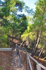 Near Waterfalls Pesas | Lesbos Greece | Greece  12 - Photo JustGreece.com