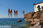 Sykaminia - Skala Sykaminia | Lesbos | Greece  5 - Photo JustGreece.com
