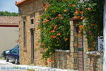 JustGreece.com Livadochori Limnos (Lemnos) | Greece | Photo 9 - Foto van JustGreece.com