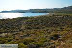JustGreece.com Near Gomati and woestijn Amothines Katalakos Limnos (Lemnos) Photo 8 - Foto van JustGreece.com