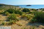 Near Gomati and woestijn Amothines Katalakos Limnos (Lemnos) Photo 20 - Photo JustGreece.com