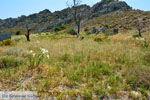 JustGreece.com Beaches Thanos Limnos (Lemnos) | Greece Photo 29 - Foto van JustGreece.com