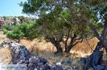 Trypiti Milos | Cyclades Greece | Photo 14 - Photo JustGreece.com
