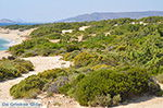 Alyko Naxos - Cyclades Greece - nr 62 - Photo JustGreece.com