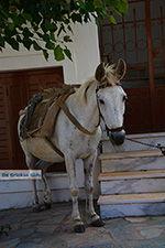 JustGreece.com Apiranthos Naxos - Cyclades Greece- nr 9 - Foto van JustGreece.com