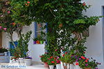 Apollonas Naxos - Cyclades Greece- nr 22 - Photo JustGreece.com