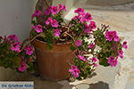 JustGreece.com Chalkio Naxos - Cyclades Greece- nr 47 - Foto van JustGreece.com