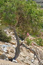 JustGreece.com Kalantos Naxos - Cyclades Greece- nr 52 - Foto van JustGreece.com