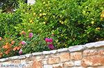 JustGreece.com Potamia Naxos - Cyclades Greece - nr 27 - Foto van JustGreece.com