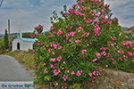 JustGreece.com Potamia Naxos - Cyclades Greece - nr 60 - Foto van JustGreece.com