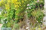 JustGreece.com Potamia Naxos - Cyclades Greece - nr 76 - Foto van JustGreece.com
