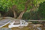 Potamia Naxos - Cyclades Greece - nr 82 - Photo JustGreece.com