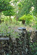 JustGreece.com Potamia Naxos - Cyclades Greece - nr 117 - Foto van JustGreece.com