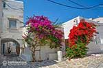 Parikia Paros - Cyclades -  Photo 50 - Photo JustGreece.com
