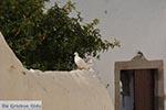 Chora - Island of Patmos - Greece  Photo 41 - Photo JustGreece.com