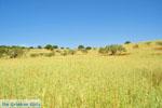 Koilada (Kilada) | Argolida (Argolis) Peloponnese | Greece Photo 8 - Photo JustGreece.com