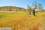 Koilada (Kilada) | Argolida (Argolis) Peloponnese | Greece Photo 12 - Photo JustGreece.com