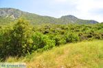 Near old Epidavros | Argolida (Argolis) Peloponnese | Greece Photo 4 - Photo JustGreece.com
