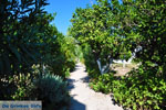 Koroni | Messenia Peloponnese | Greece  23 - Photo JustGreece.com