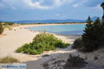JustGreece.com Near Gialova and Voidokilia | Messenia Peloponnese | Photo 47 - Foto van JustGreece.com