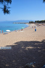 JustGreece.com Kyparissia | Messenia Peloponnese | Photo 10 - Foto van JustGreece.com