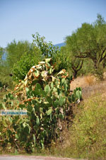 Meligalas | Messenia Peloponnese | Photo 3 - Foto van JustGreece.com