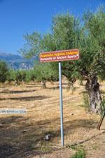 Ancient-Sparta (Archaia Sparti) | Lakonia Peloponnese | 7 - Photo JustGreece.com