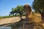 Ancient-Sparta (Archaia Sparti) | Lakonia Peloponnese | 12 - Photo JustGreece.com