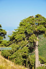 JustGreece.com Mountain villages Ziria | Corinthia Peloponnese | Greece  9 - Foto van JustGreece.com