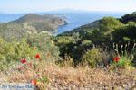 Poros | Saronic Gulf Islands | Greece  Photo 209 - Photo JustGreece.com