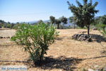 Poros | Saronic Gulf Islands | Greece  Photo 218 - Photo JustGreece.com