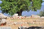 Poseidon heiligdom Poros   Saronic Gulf Islands   Greece  Photo 223 - Photo JustGreece.com