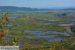 Ammoudia, Acheron delta - Prefecture Preveza -  Photo 9 - Photo JustGreece.com