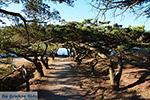 Filerimos Rhodes - Island of Rhodes Dodecanese - Photo 304 - Photo JustGreece.com