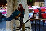 JustGreece.com Rhodes town - Rhodes - Island of Rhodes Dodecanese - Photo 1372 - Foto van JustGreece.com
