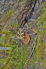 JustGreece.com Valley of Butterflies Rhodes - Island of Rhodes Dodecanese - Photo 1857 - Foto van JustGreece.com