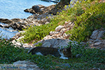 JustGreece.com Psili Ammos Mykali Samos | Greece | Photo 11 - Foto van JustGreece.com